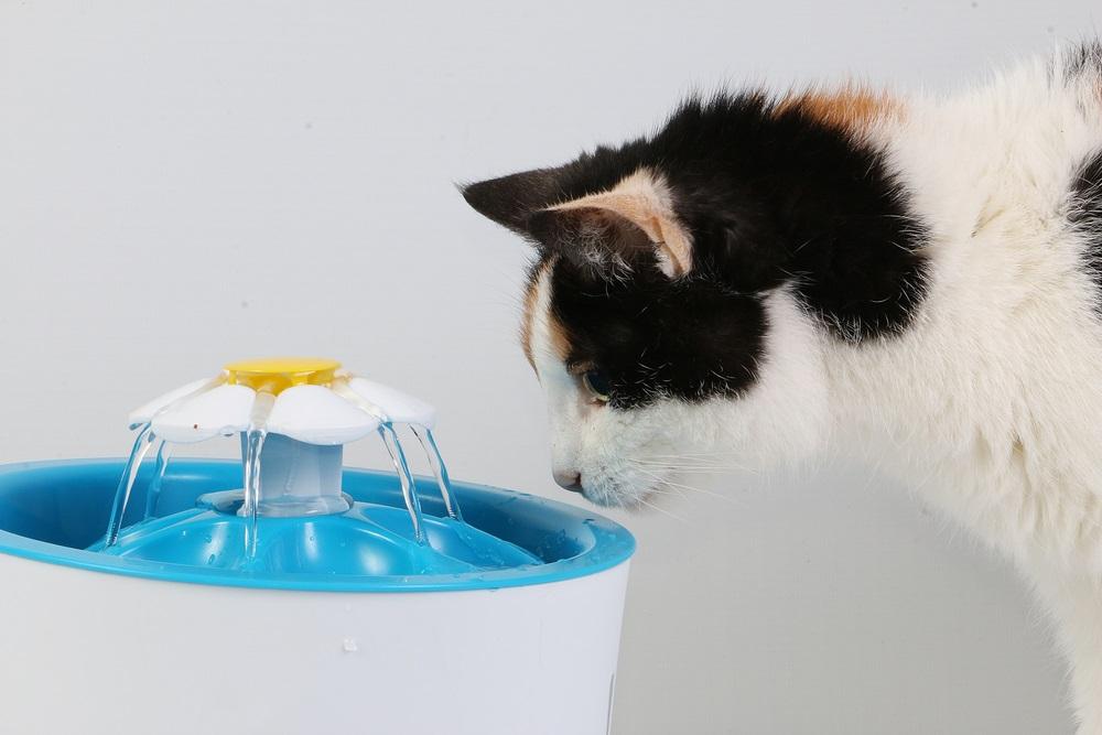 drinkfontein kat