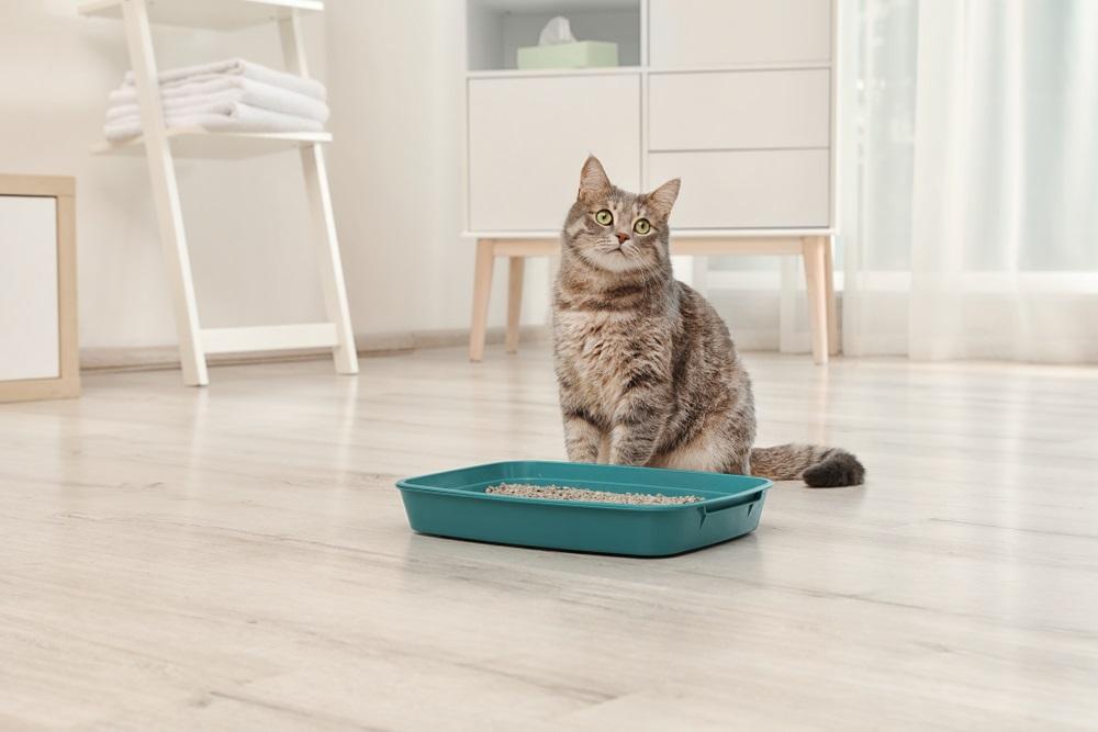 Kattenbakvulling beste
