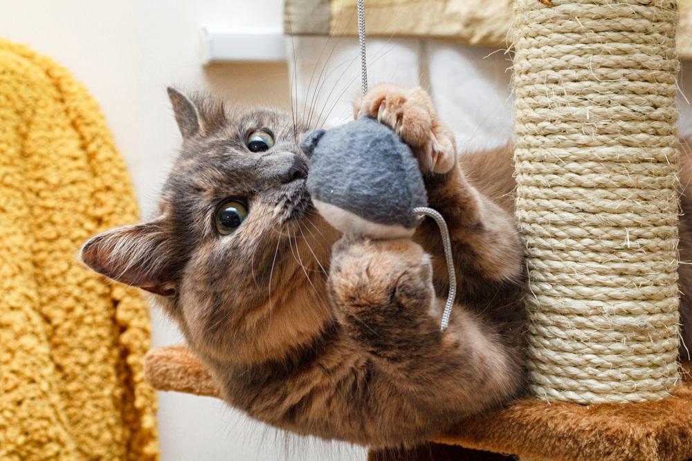 Kattenspeelgoed beste