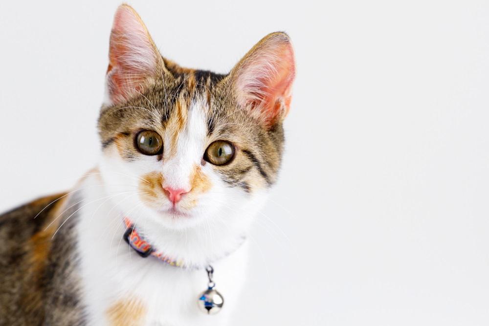 Kattenhalsband beste