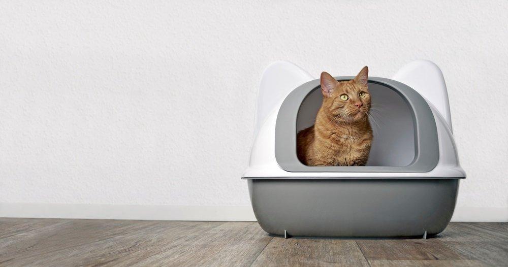 Grote kattenbak