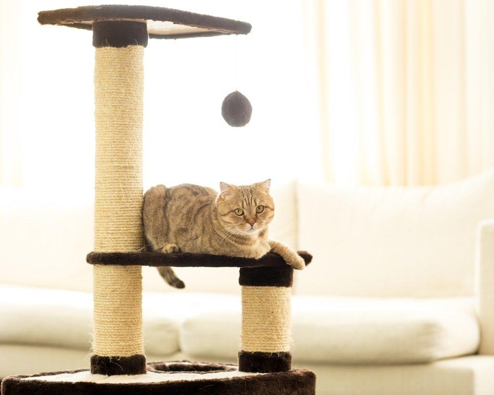 Krabpaal grote kat