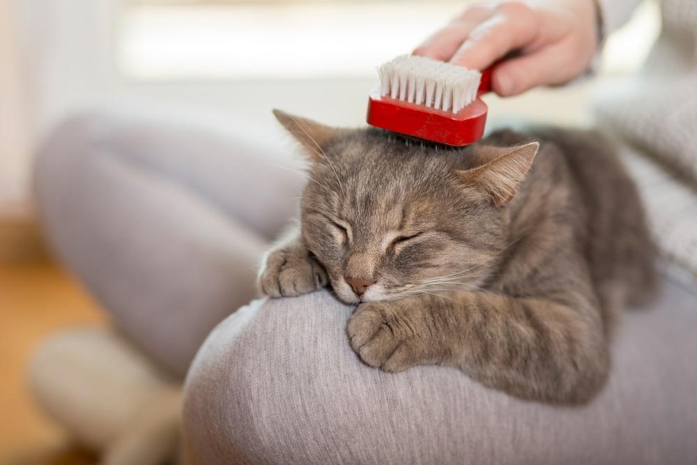 Kattenborstel beste