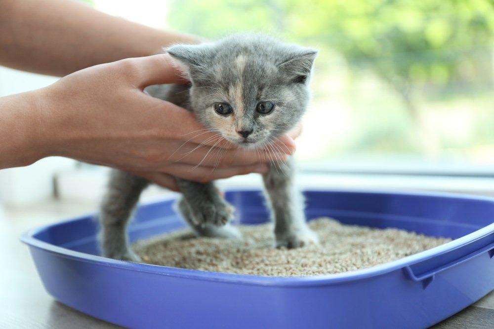 kat op kattenbak zetten zindelijk maken