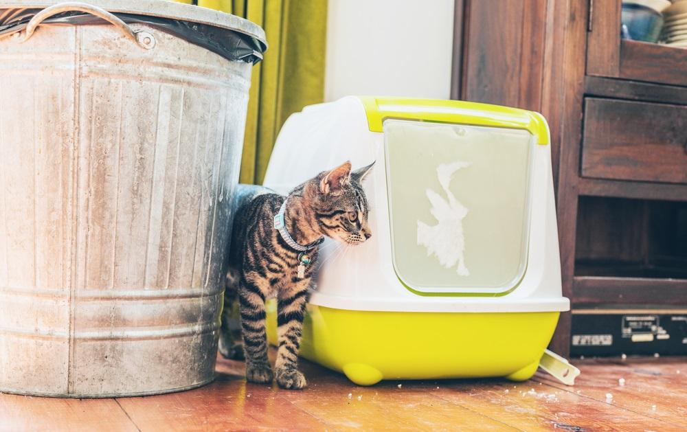 kat in huis poepen