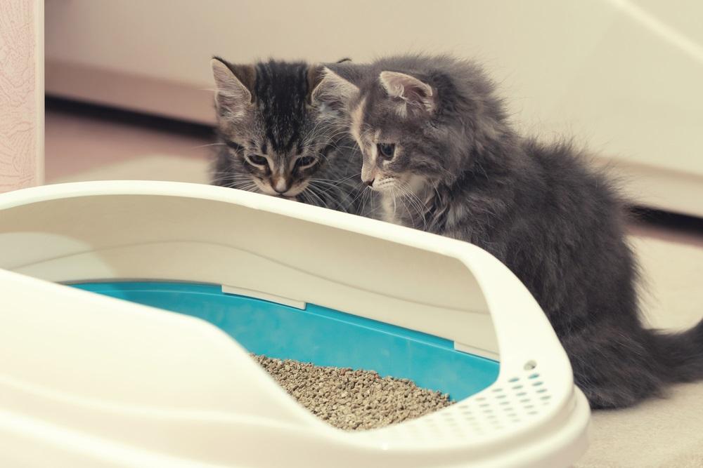 genoeg kattenbakken